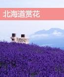 北海道赏花攻略