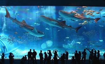 冲绳本岛5处景点套票(含美丽海水族馆+4处景点)