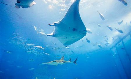 壁纸 动物 海底 海底世界 海洋馆 水族馆 鱼 鱼类 450_273