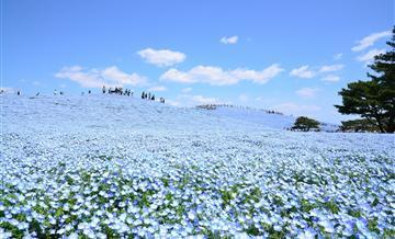 【KANTO BUFFET】一日国营常陆海滨公园+3日东京广域周游券