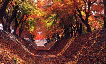 河口湖赏枫1日游 秋季限定 游枫叶回廊升仙峡 含海鲜蟹料理午餐